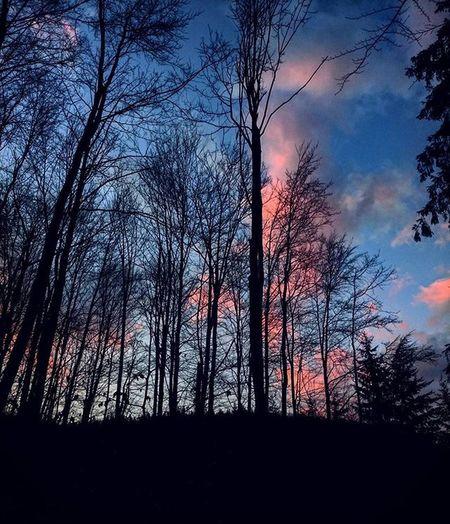 Złotystok Las Zachod Drzewa Chmury Forest Sunset Trees Clouds