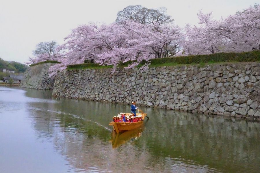 Japan Photography River Beauty In Nature Peace Japan FUJIFILM X-T1 Beauty In Nature Fujifilm Introducing Culture Of Japan Which Must Be Left To The Future…… 未来に残す日本の文化 Cherry Blossoms Spring