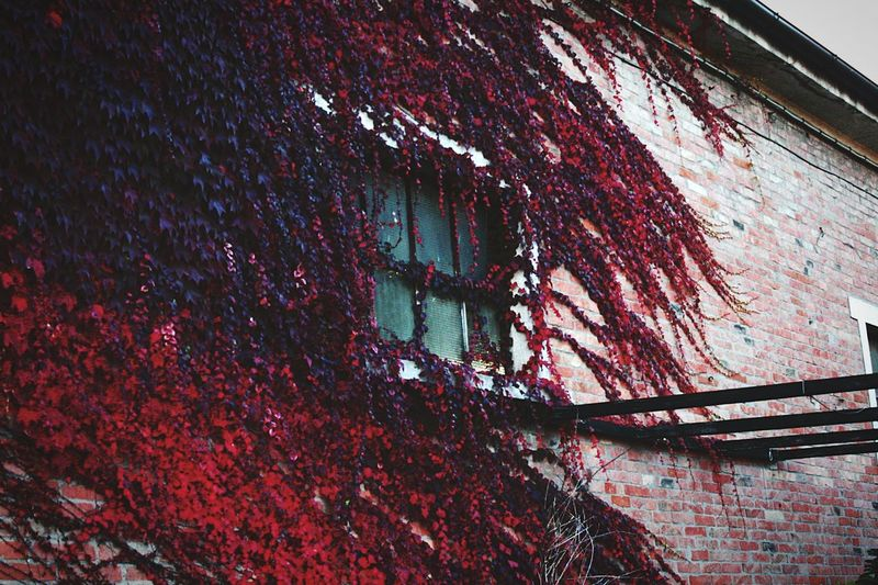 Built Structure Building Exterior No People Outdoors Red Architecture Close-up Sky Day Indoors  Tranquil Live Streetphotography Communication Street Life Learning Street Photography Streetphoto Strong Light Ivy Ivy Covered Ivy House IvyEntures2016 Ivy Covered Wall Nature Nature_collection