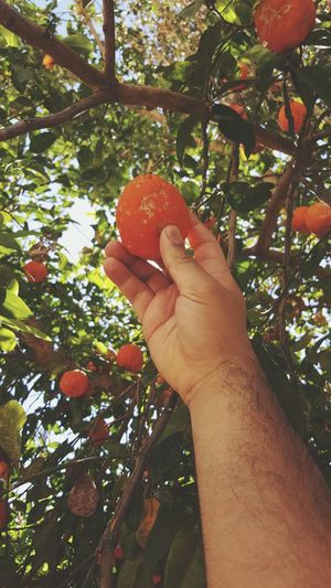 Human Body Part Tree One Person Human Hand Fruit Day Food And Drink Outdoors People Freshness Nature Healthy Eating Food Adult Close-up Adults Only