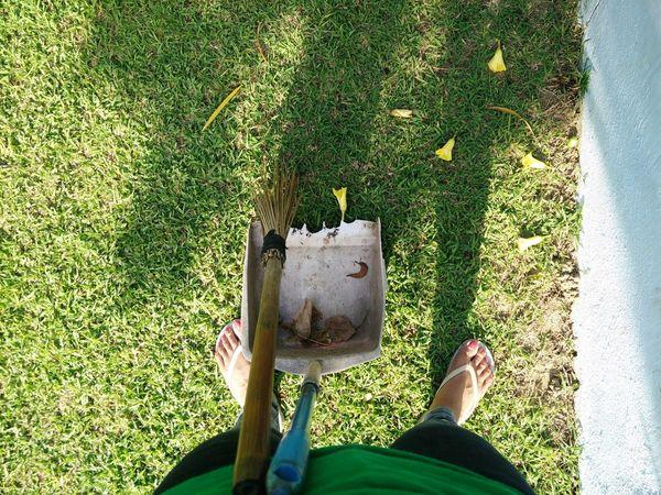 Morning chore. Green Grass Nature Flower Yellow Flower Chore Mornings Thegreatoutdoors2015EyeemAwards Thursday Open Edit
