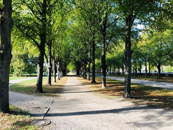 Georgengarten Hannover Hanging Out Urban Tree Plant The Way Forward Sunlight Shadow Direction Day No People Nature Footpath Diminishing Perspective Treelined Outdoors Growth Road Park Trunk Tranquility Park - Man Made Space Beauty In Nature