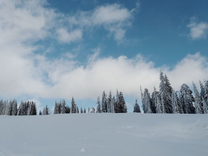Environment Reflection Sky Bueautiful Natur Nature Blue Mountain View Lake View Wonderful Trees White Forest Photography Frozen Trees And Nature White Background Wallpaper Tree Wilderness Area Mountain Tree Area Snow Spruce Tree Cold Temperature Snowing Winter Forest Pine Tree Frost Pine Woodland Cold