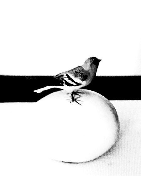 Bird Egg Black & White Eye4photography  @ Ernesto Galizia Contemporary Art Contrast