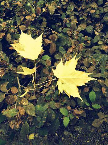 Bright Autumn Colors First Eyeem Photo