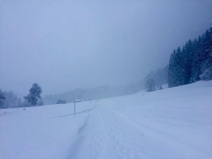 Snowing Snow Cold Temperature Winter Tree Plant Scenics - Nature Beauty In Nature Environment Landscape