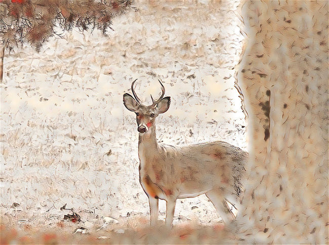Animal Themes Animal Wildlife Animals In The Wild Beauty In Nature Day Deer Mammal Nature No People One Animal Outdoors Stag Standing