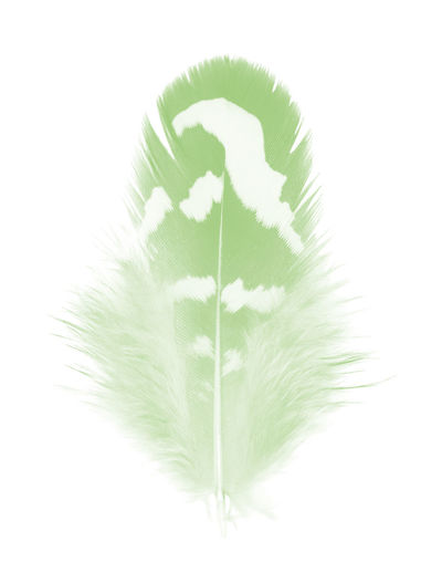 Leaf Studio Shot White Background Plant Part Cut Out Green Color No People Close-up Indoors  Nature White Color Plant Lightweight Creativity Single Object Beauty In Nature Natural Pattern Direction Feather  Vulnerability  Softness