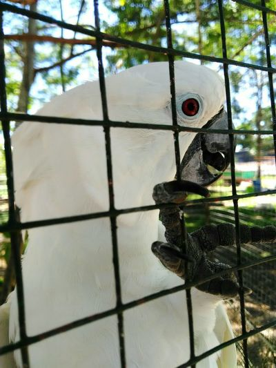 Eyeem Philippines EyeemPhilippines Mobilephotography The Great Outdoors - 2017 EyeEm Awards Day No People Metal Grate Indoors  Sky Close-up Prison Bird Animal Themes Animal Wildlife Pet Portraits