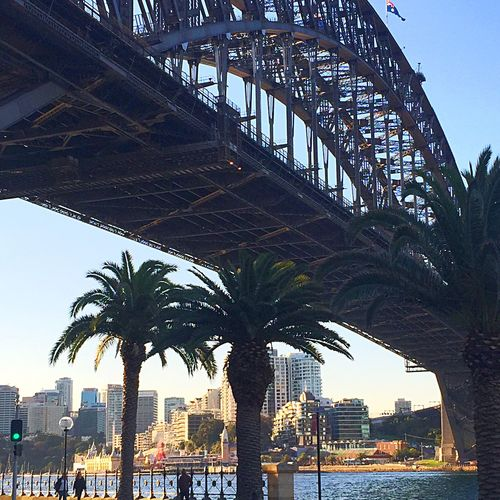 Sydneyharbour SydneyHarbourBridge Australia Travel Photography OpenEdit IphoneSixPlus Iphonesia Sydney Palm Trees Tree_collection