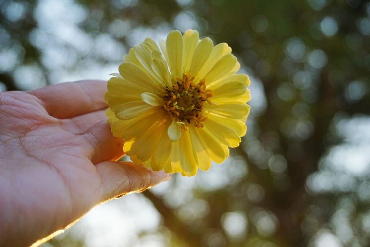 Flower of the