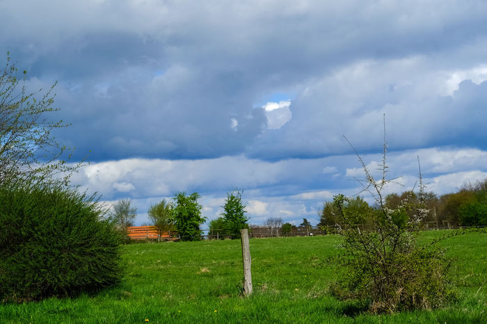 Cloud - Sky Tree Grass Green Color Sky Day No People Nature Outdoors Beauty In Nature Jacqueline Schreiber Fujifilm_X-M1 Auto_revuenon 50mm Manuel_focus Beauty In Nature Outdoor Photography Buxtehude Springtime