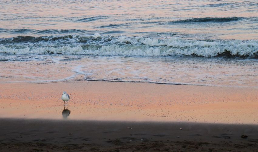 Beach Sea Sand Water Wave Nature Outdoors Bird Beauty In Nature