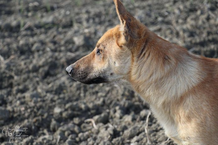 #dog #Doglife #doglover #Nature  EyeEm Selects Pets Dog Side View Close-up Animal Body Part Animal Eye Yellow Eyes