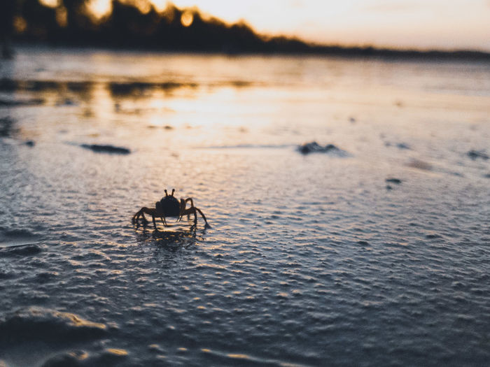 Crustacean sunset