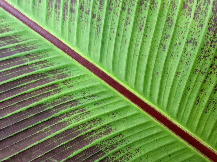 IPhoneography IPhone Photography The Week On Eye Em Abstract Leaf Green Pattern Patterns & Textures Nature Plants