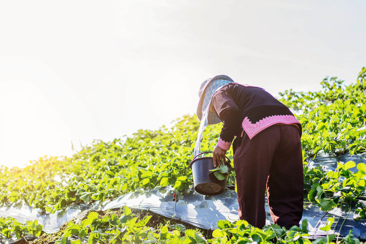 Low Section Of Woman Working In Farm