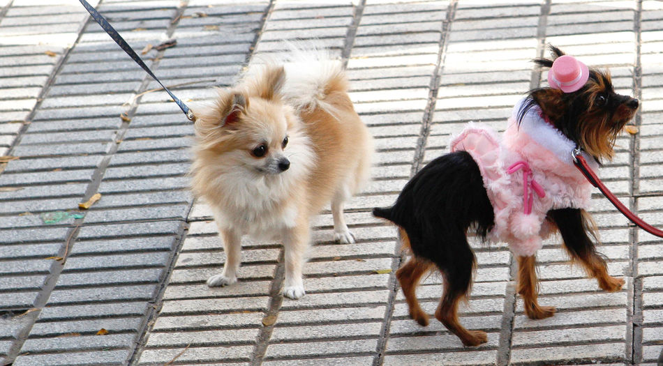 Animal Themes Animals Clothes Clothing Companion Cute Dogs Domestic Animals Dressed Fashion Little Mammal Pets Surprise Two Animals