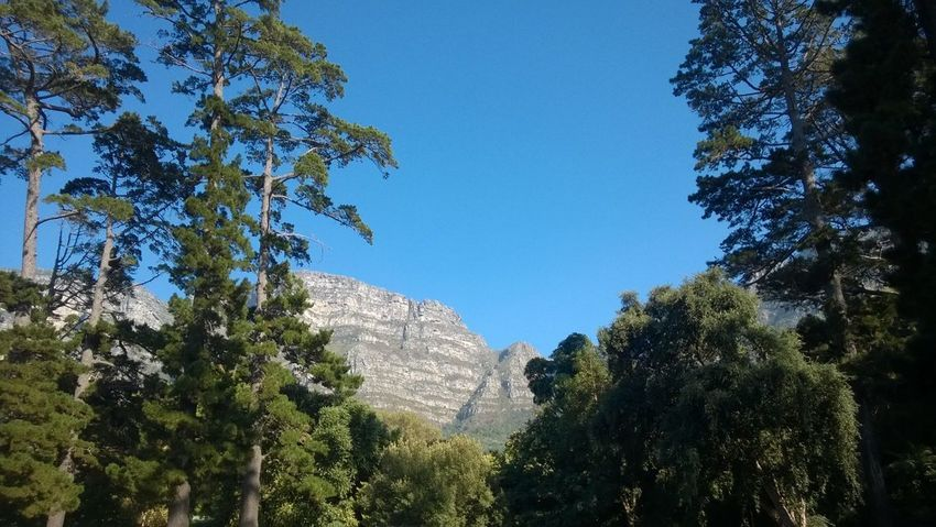 An Eye For Travel Cape Town, South Africa Table Mountain Adventure Beauty In Nature Blue Sky Clear Sky Forest Mountain Newlands No People Tree