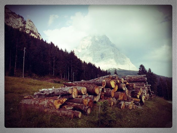 Mountain View Wood Trees Mountain View Monte Pelmo Holiday Trekking