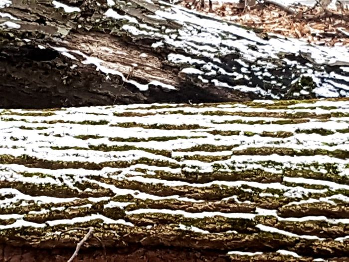 Tree Bark Texture Tree Trunk Cold Temperature Winter Close-up