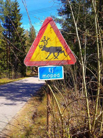 Roadsign Reindeer Moped Makes No Sense