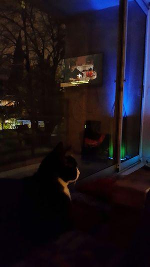 Toto mirando la tv tranquilo! Domestic Cat Love My Family ❤ Lifeisbeautiful Cute Cat 😻