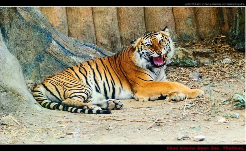 KHAO KHEOW Open Zoo, Thailand. Animals Animal Travel Thailand_allshots