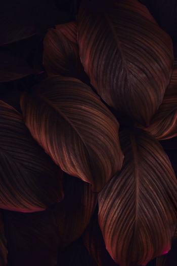 Full frame shot of fresh leaves