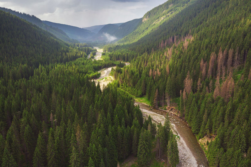 Summer landscape in the Carpathians. Aerial view of beautiful forest landscape Mountain Nature Outdoors Sunrise Parang Landscape Valley Blossom Light Green Summer Romania Green Color Forest Transportation Coniferous Tree Pine Tree