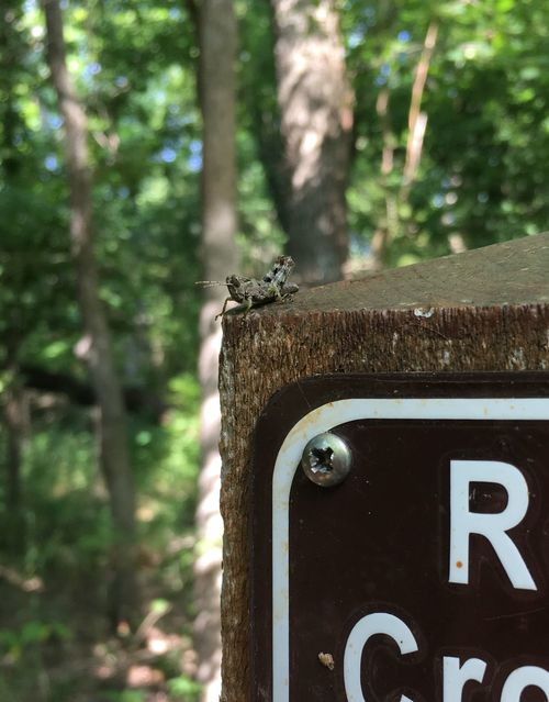 Tiny cricket on sign Bug Animal Animal Themes Close-up Communication Cricket Day Focus On Foreground Forest Insect Land Metal Nature No People Number Old Outdoors Plant Rusty Tree Tree Trunk Trunk Wood - Material