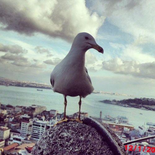 Marti Animal Sevgi Poz istanbul galata kulesi objektifimden oan sahil sirin instaturkey benim dunyam