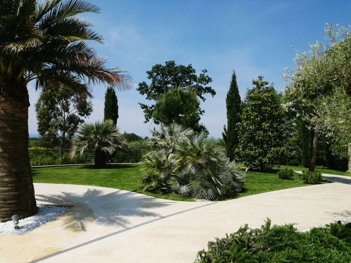 Tree Nature Sky No People Day Outdoors Shadow Growth Palm Tree Water Beauty In Nature Croatia Tree