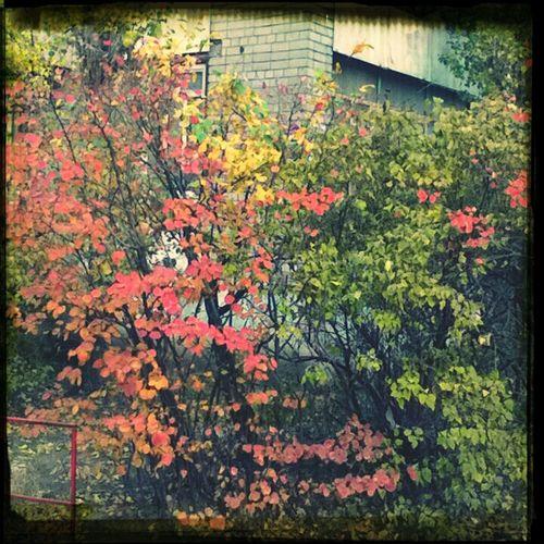 куст светофор осень