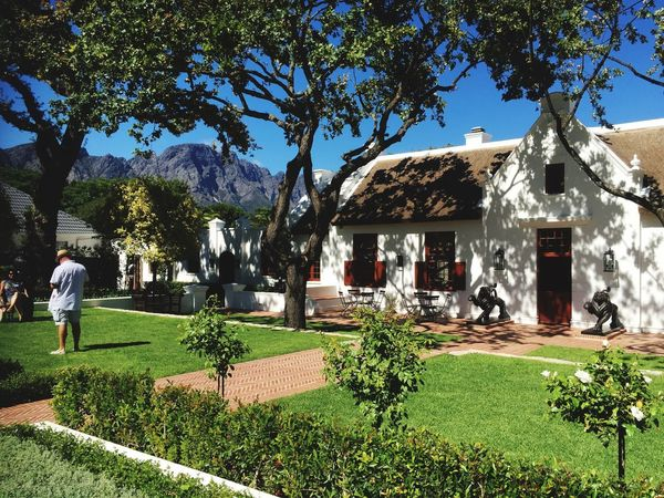 The Cape South Africa Tree Day Grass Growth Architecture Building Exterior Real People Sunlight Outdoors Built Structure Beauty In Nature