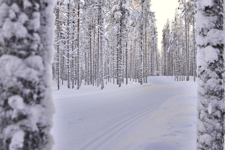 Snow covered field in forest