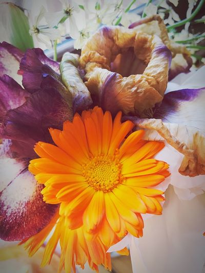 Color pop Centerpiece Flower Head Purple Peaceful Evening Light Interesting Shots IPhoneography Eyemphotography Flower Flowering Plant Vulnerability  Plant Fragility Freshness The Still Life Photographer - 2018 EyeEm Awards Beauty In Nature Flower Head Petal Growth Close-up Inflorescence Nature Pollen Yellow Day No People Botany Indoors  Flower Arrangement