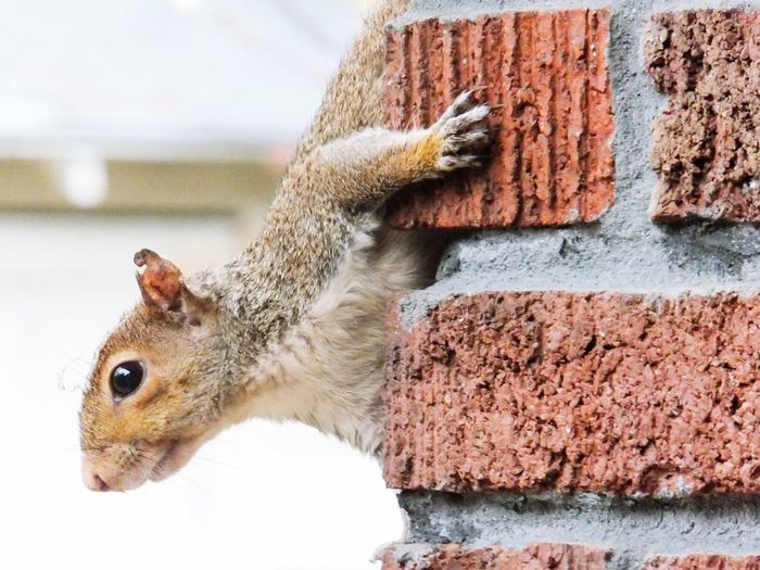 One Animal Animal Themes Close-up Mammal Squirrel Outdoors Nature Rodent Animals In The Wild