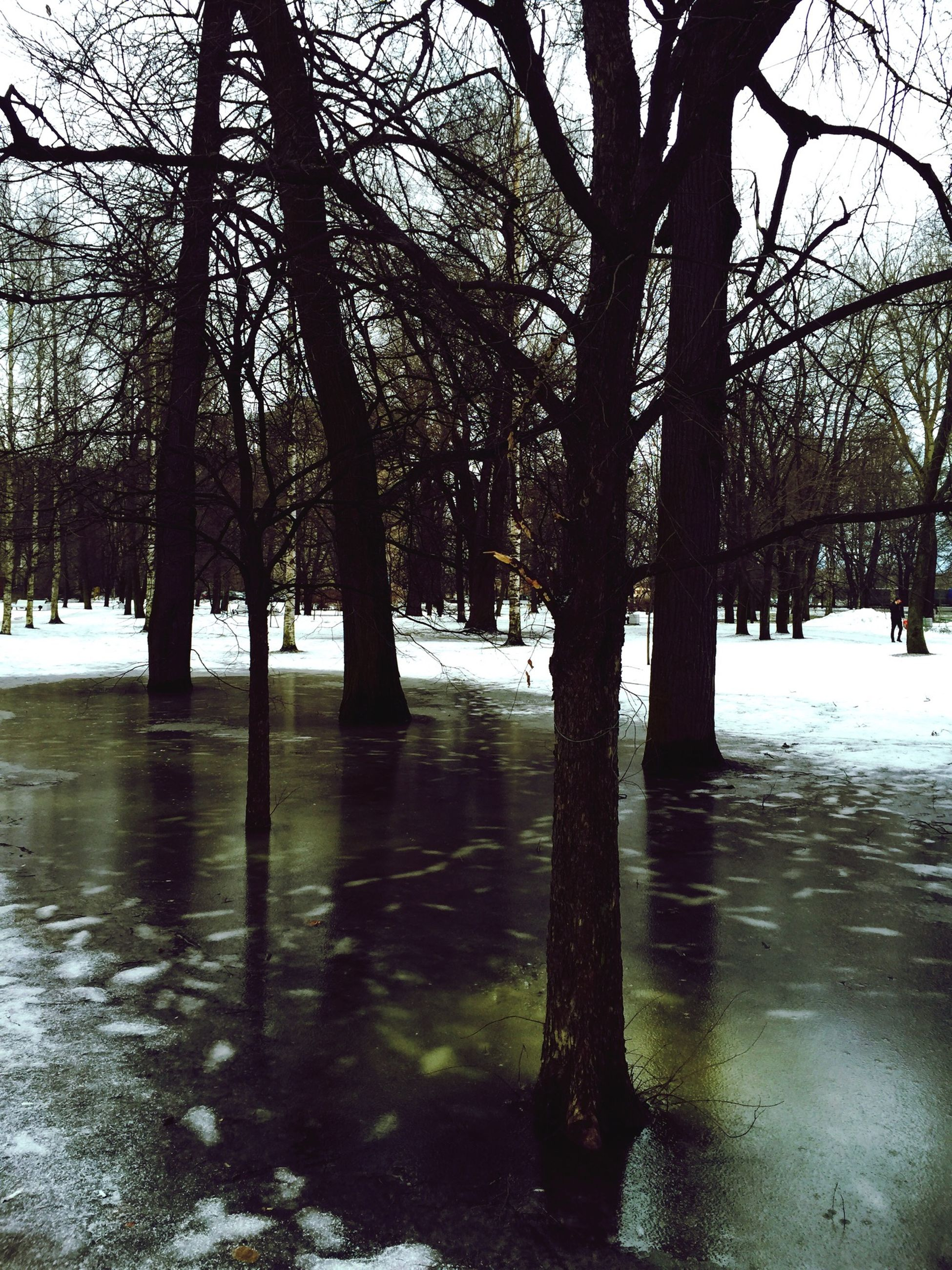 tree, bare tree, tree trunk, winter, water, snow, branch, season, tranquility, cold temperature, nature, tranquil scene, weather, park - man made space, beauty in nature, lake, scenics, treelined, outdoors, river
