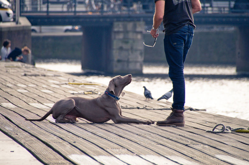 Low section of man with dog on pier