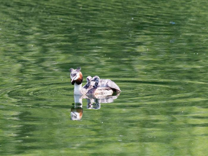 Full length of man swimming in lake