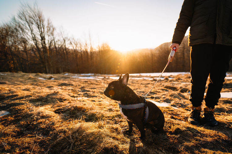 View of french bulldog dog and dog owner on field against sky at sunset during winter