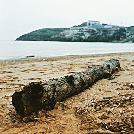 Hayat kıyıya vurmak gibi. Rotan başka olduğun yer başka. Mamiya Mamiyac220 Mediumformat Analog analogphotography 6x6 ishootfilm filmisnotdie kodak kodakfilm portra portra400 blacksea riva istanbul turkey sea tree