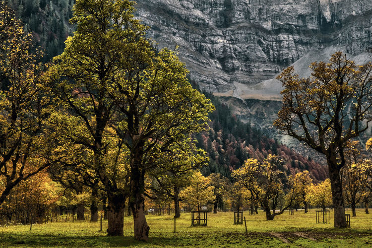 Green trees against mountain