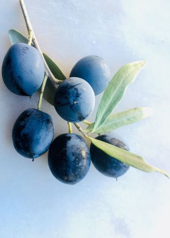 Ripe olives on branch Olives Macro Fruit Food Food And Drink Freshness Healthy Eating No People Close-up Nature Ripe Leaf