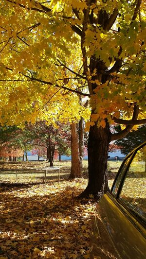 Fall Beauty Georgiafall