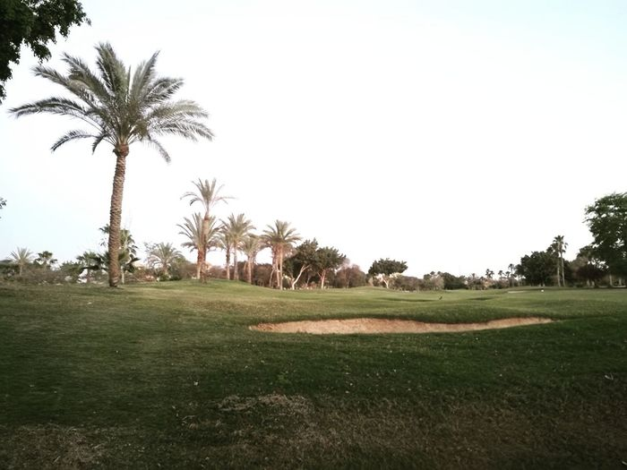 Tree Palm Tree Golf ⛳ Nature Sport Beauty In Nature Sky Relaxing