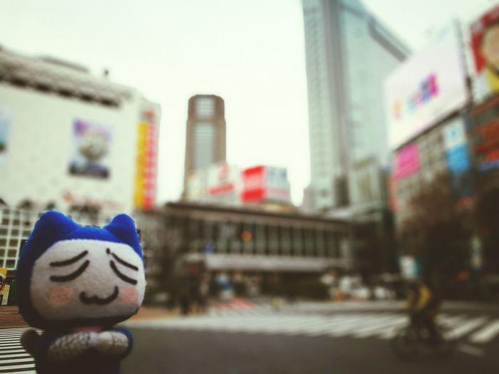 toro shibuya tokyo japan City No People Outdoors Day Close-up