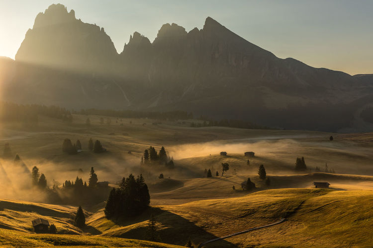 Overlooking Alpe di Siusi Autumn Dolomites Field Nature Sunlight Sunrays Tree Trees Beauty In Nature Early Morning Environment Fields Landscape Mountain Range Mountains Nature No People Outdoors Scenics - Nature Shadows Sunlight Sunrise Tranquil Scene Tranquility Capture Tomorrow
