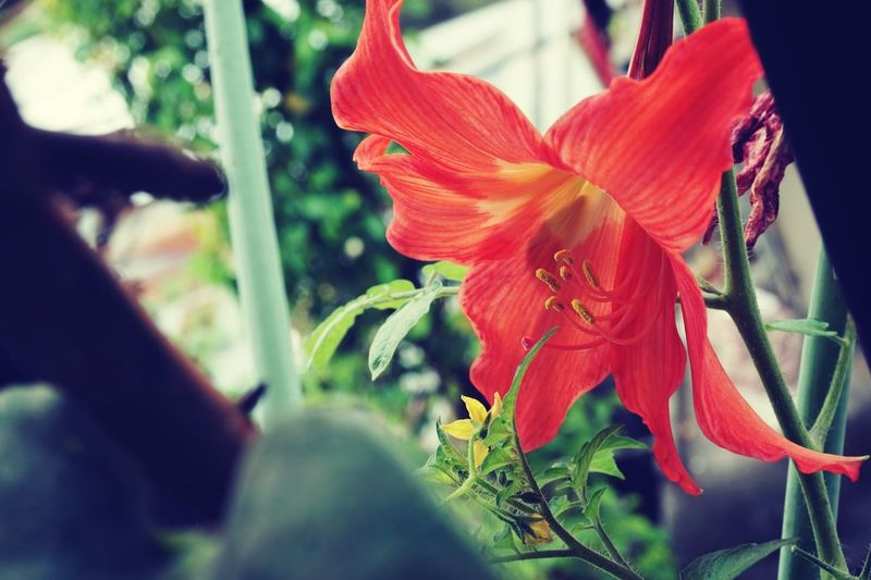 Flower Lomo Memycameraandi Nature